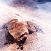 trevor-the-toad-harry-potter-38228309-100-100.png